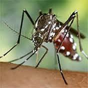 Ant Facilities ofereix solucions per combatre plagues de mosquit tigre i formigues